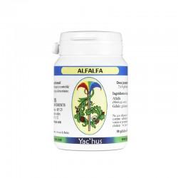 yachus-alfalfa-oestrogene-hormone-menopause-thyroide
