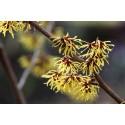 yachus-eau-florale-hamamelis-tonique-microcirculation-pore