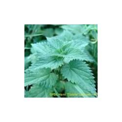 Ortie piquante feuilles - 70 gélules